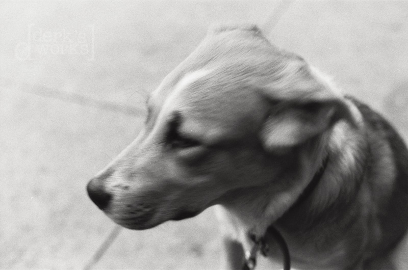 ColumbusPhotographer-around town-FILM20130125-001