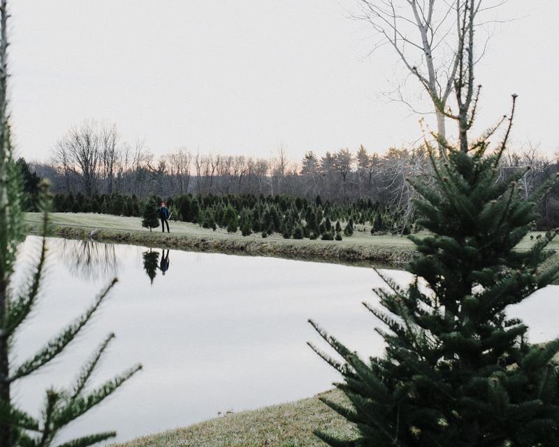 DerksWorksPhotography2014 christmas tree_014