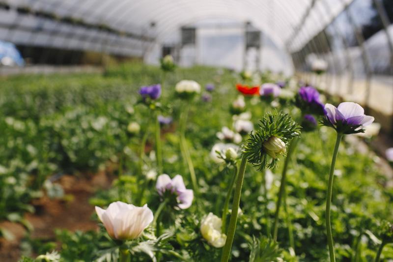 Derks Works Photography Sunny Meadows Flower Farm_001