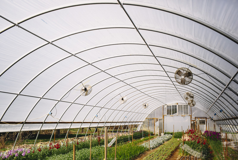 Derks Works Photography Sunny Meadows Flower Farm_002