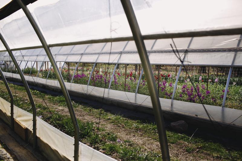 Derks Works Photography Sunny Meadows Flower Farm_010
