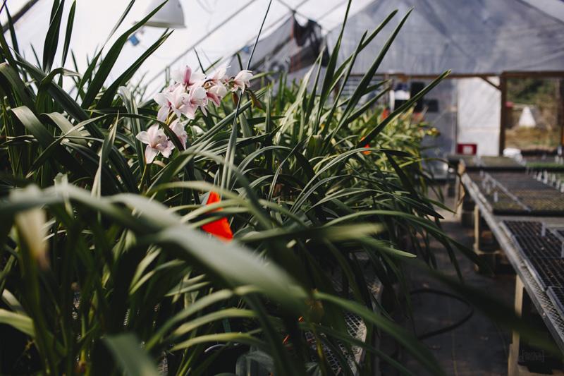 Derks Works Photography Sunny Meadows Flower Farm_017