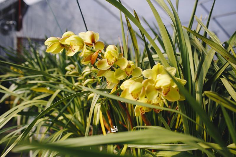 Derks Works Photography Sunny Meadows Flower Farm_021
